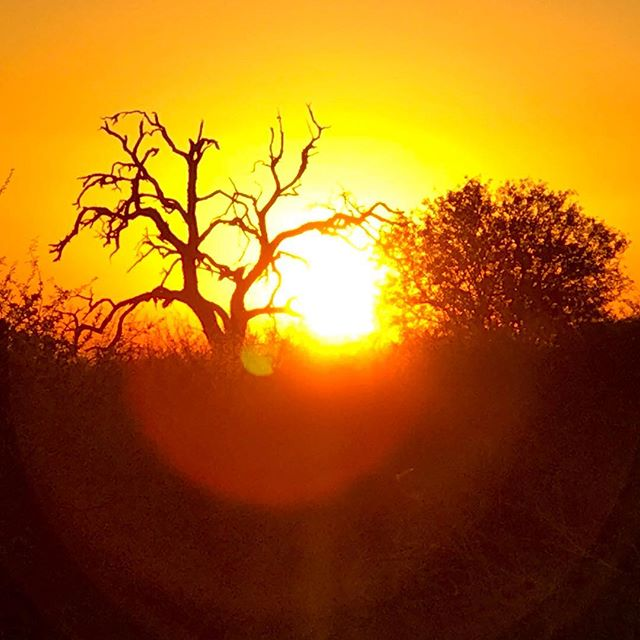 There is just some magic hidden in an African sunset... #iphoneography #thisissouthafrica #lifeofadventure #adventuretime #adventureisoutthere #adventurevisuals #outdooradventurephotos #nakedplanet #beautifuldestinations #roamtheplanet #allaboutadventures #wildernessculture #thediscoverer #earthpics #natureisbeatutiful #naturesbeauty #discoverearth #traveladdict #lonelyplanet #moodygrams #gramslayers #photographyisart #ourmoodydays #landscapelovers #landscapephotography #love_all_sky #super_photosunsets #skyscapes #natgeoyourshot #nature_perfection