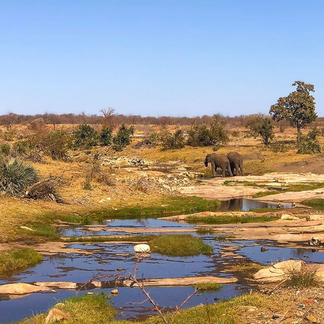 Just some Saturday inspiration from Kruger Park. Let's address the elephant(s) in the room- landscapes are terrifying... mostly because competing with nature is a losing competition 🌈🙈#nature #spottheelephant #elephantintheroom #landscape #art #naturephotography #photography #landscapeart #southafrica #conservation #water #inspiration #motivation #africa