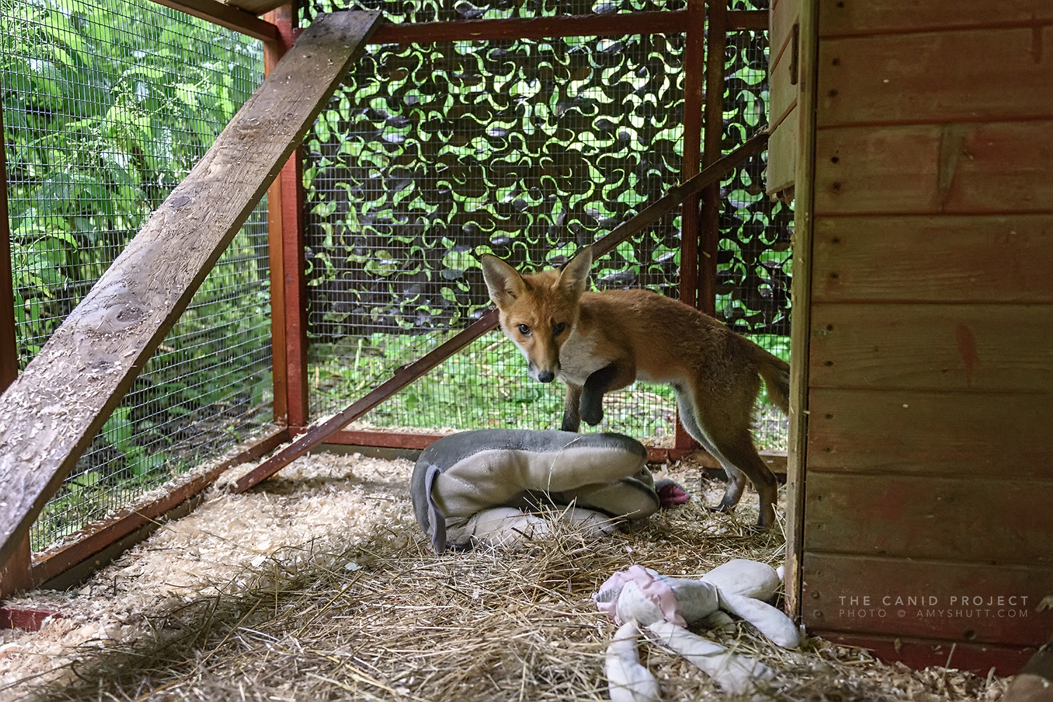 Inside a cub enclosure