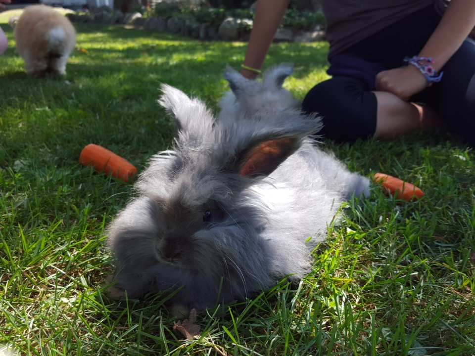 Insanely cute rabbits at Hidden Pastures