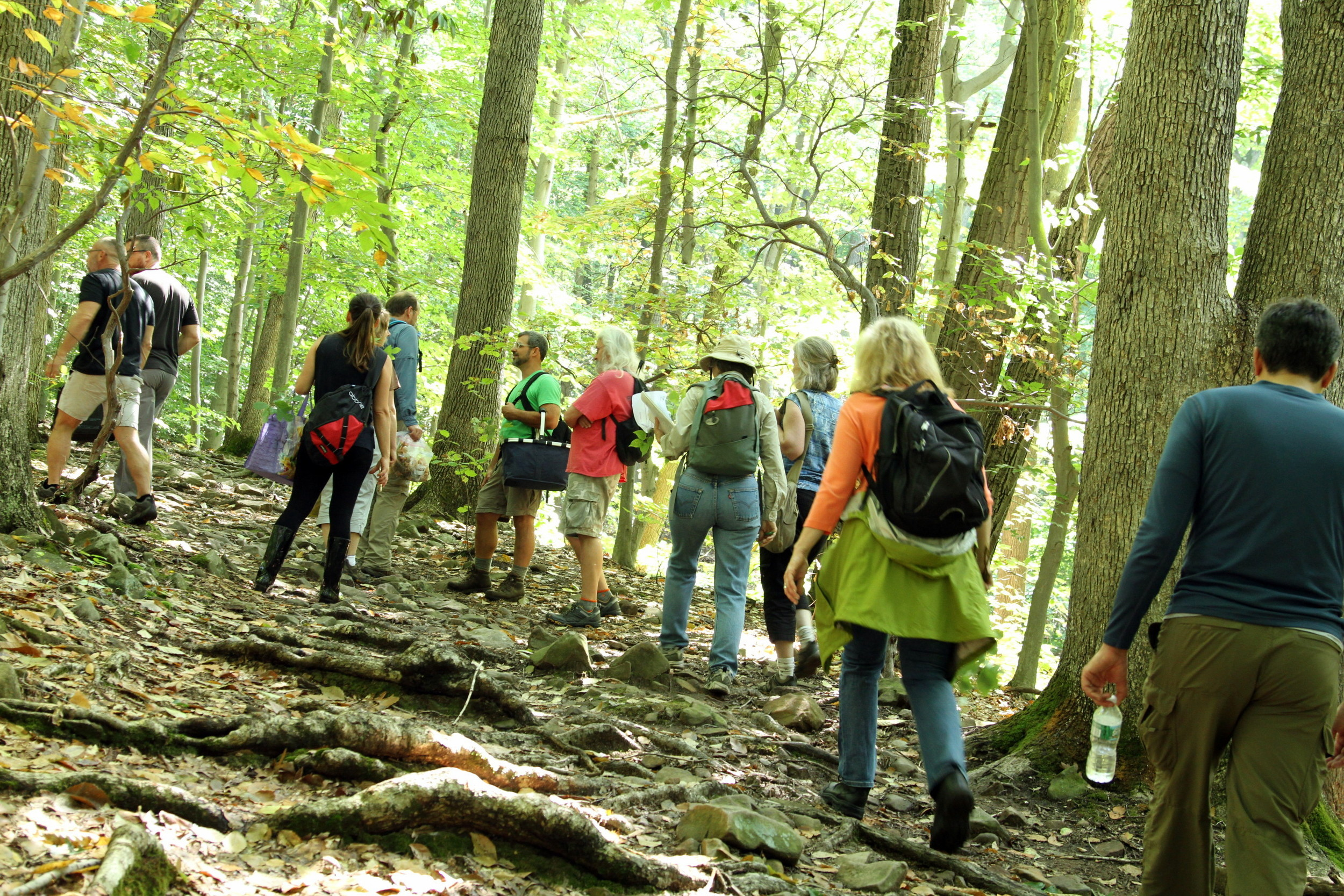 Our group of foraging hikers