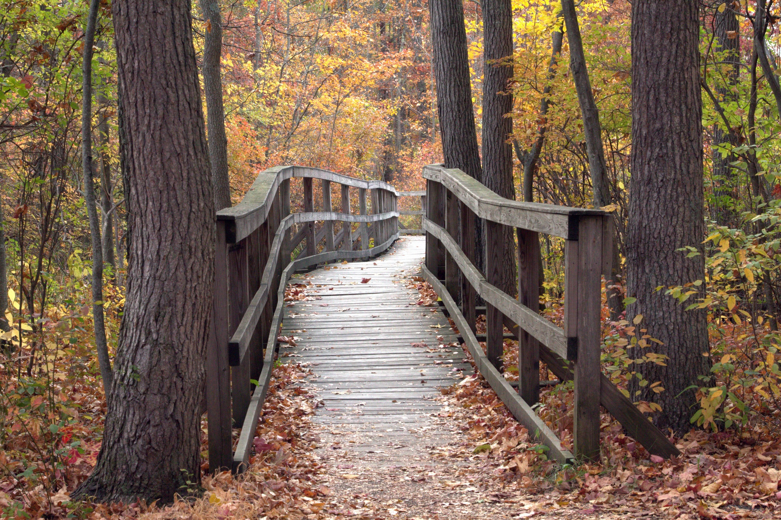 Walkway through the Great Swamp
