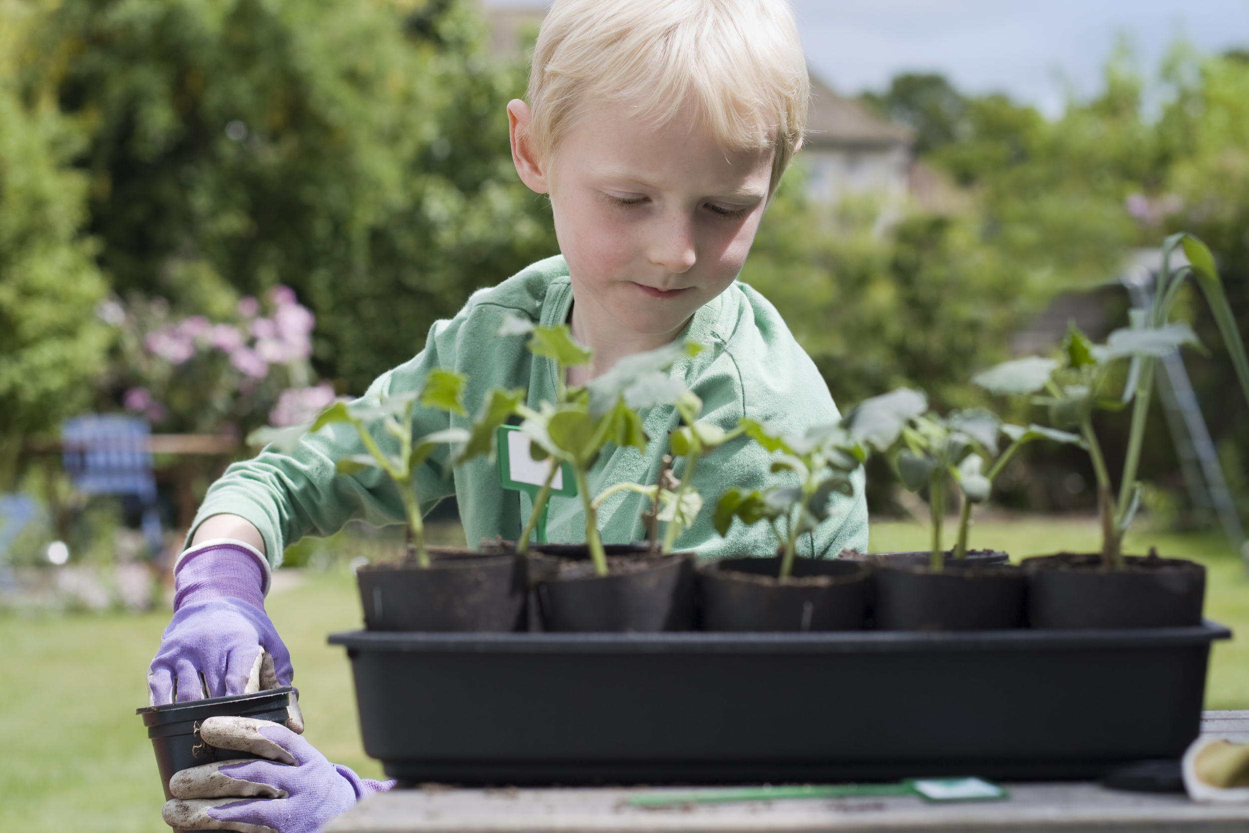 boy-gardening