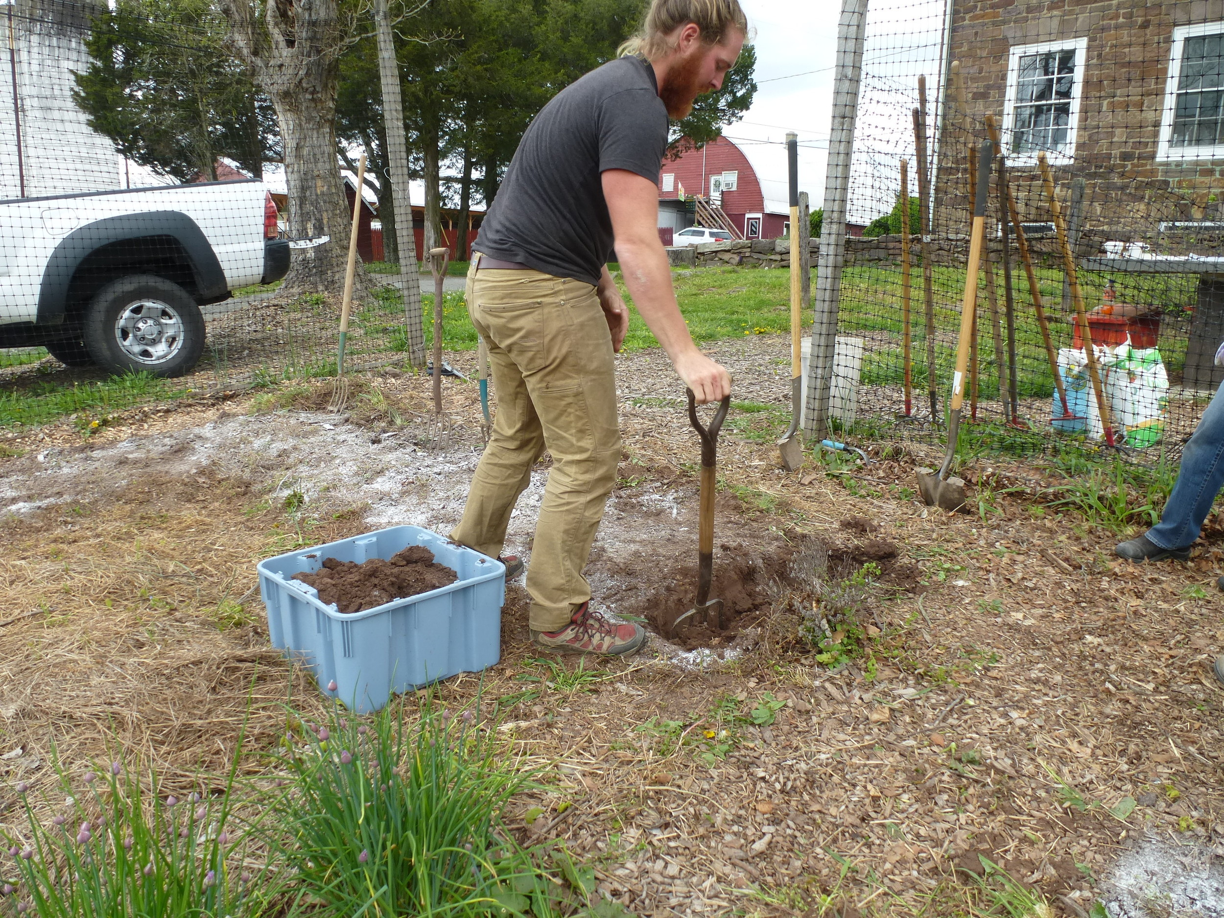 Starting the initial trench for double-digging