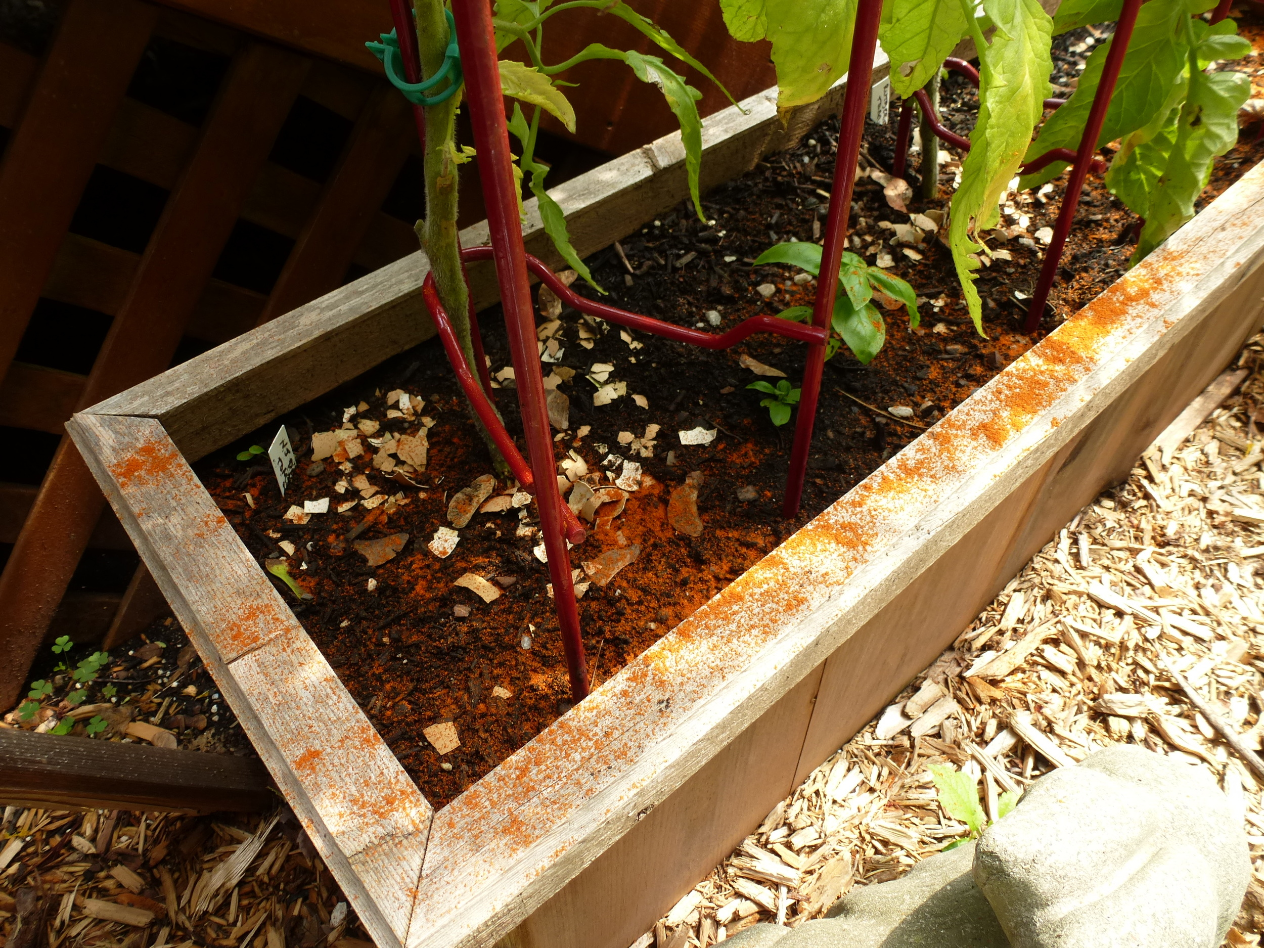 Sprinkled cayenne pepper around the plants