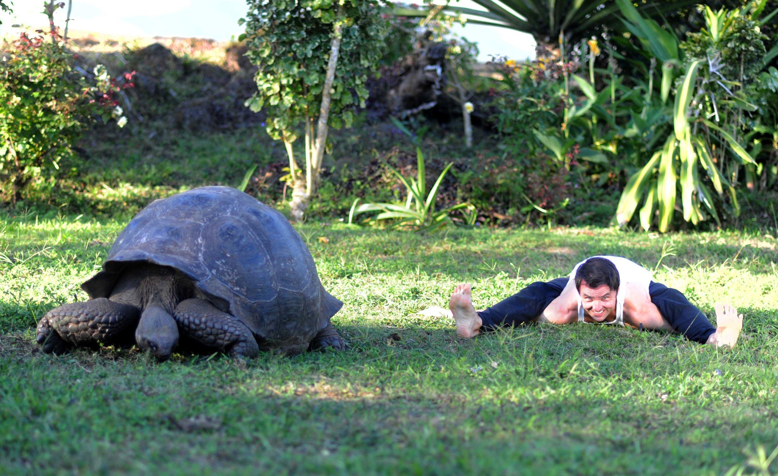 Kurmasana & Turtle - Small.jpg
