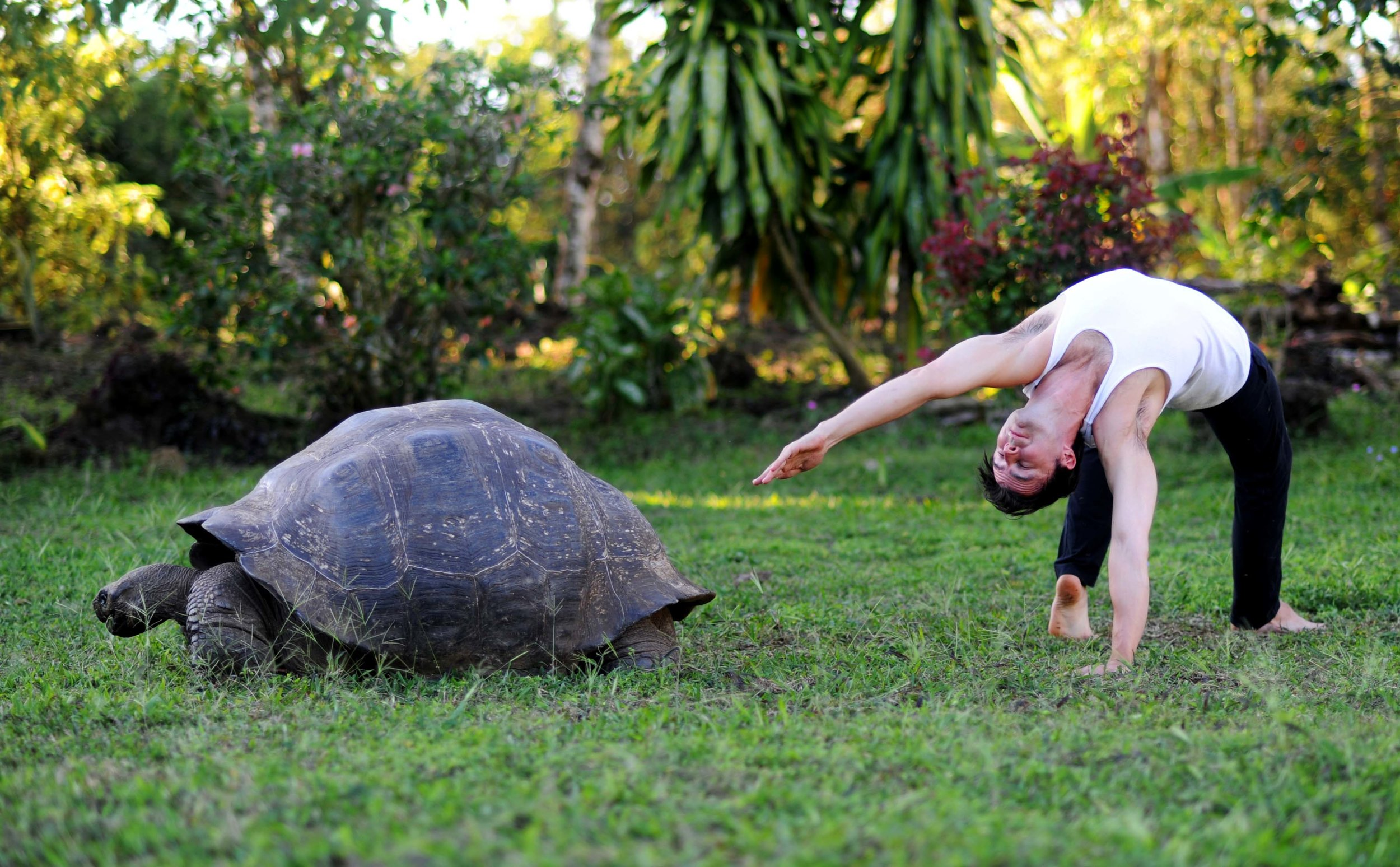 Side Balance Variation & Turtle - Small.jpg