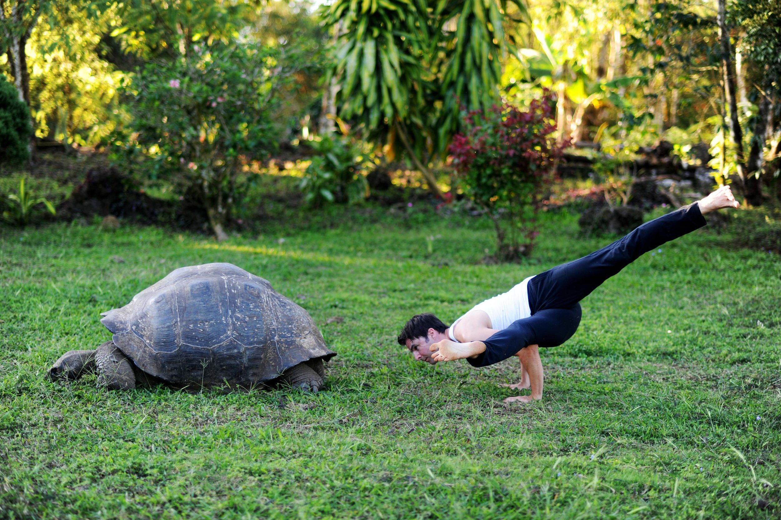 Twisting Koundinyasana & Turtle - Small.jpg