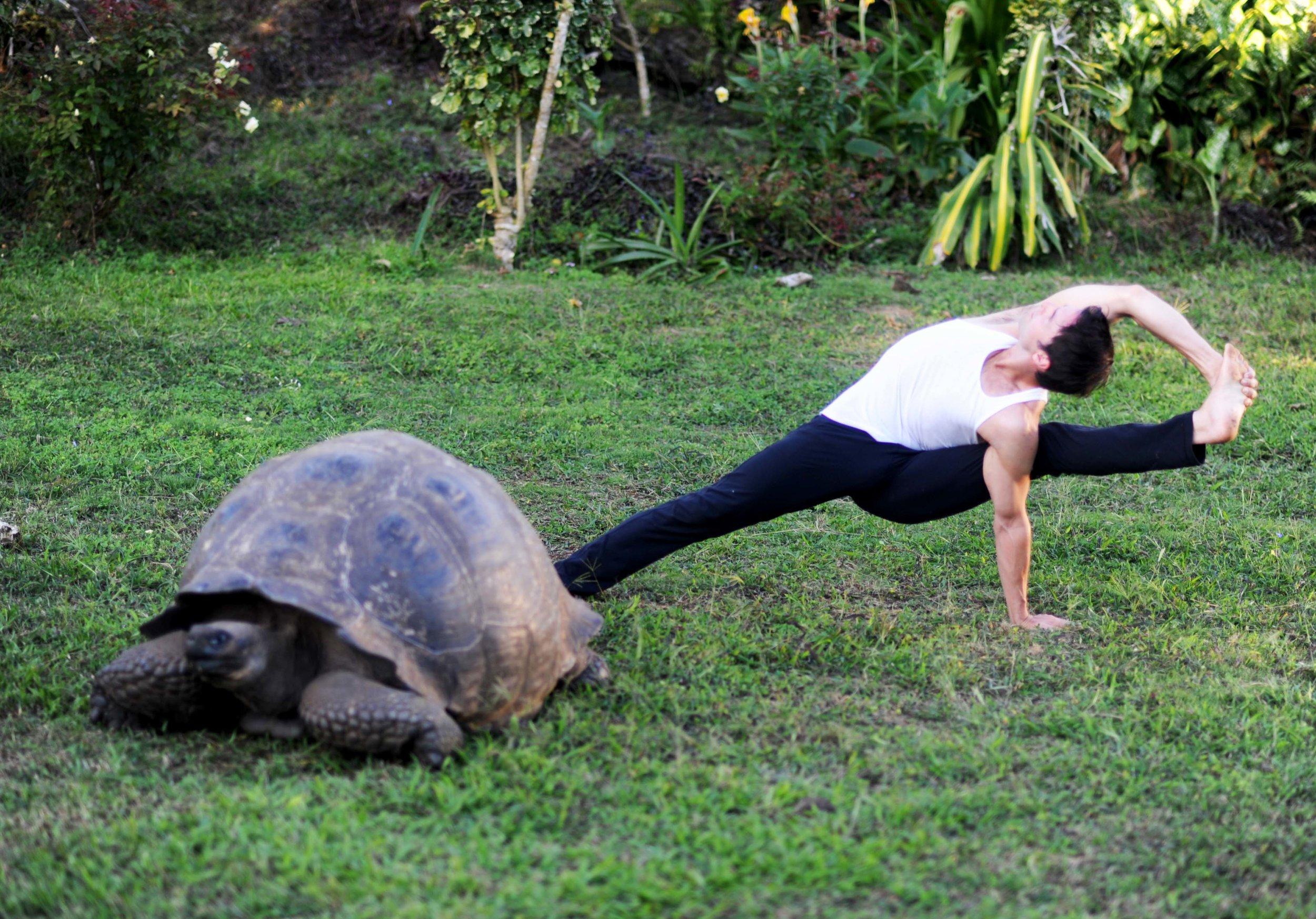 Vishvamitrasana & Turtle - Small.jpg