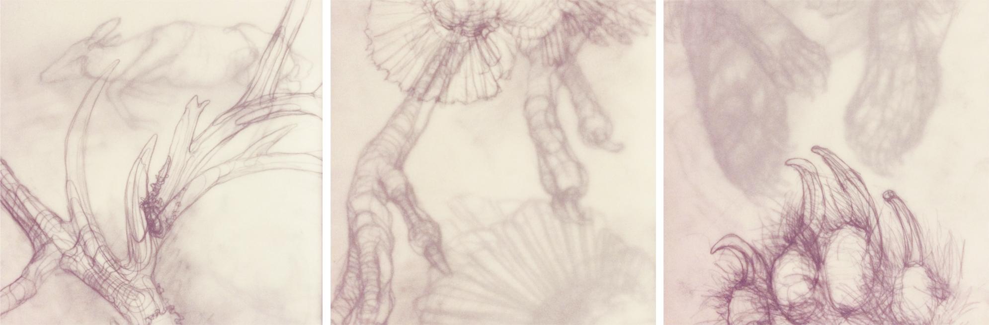 ley_lines_wildlife_triptych