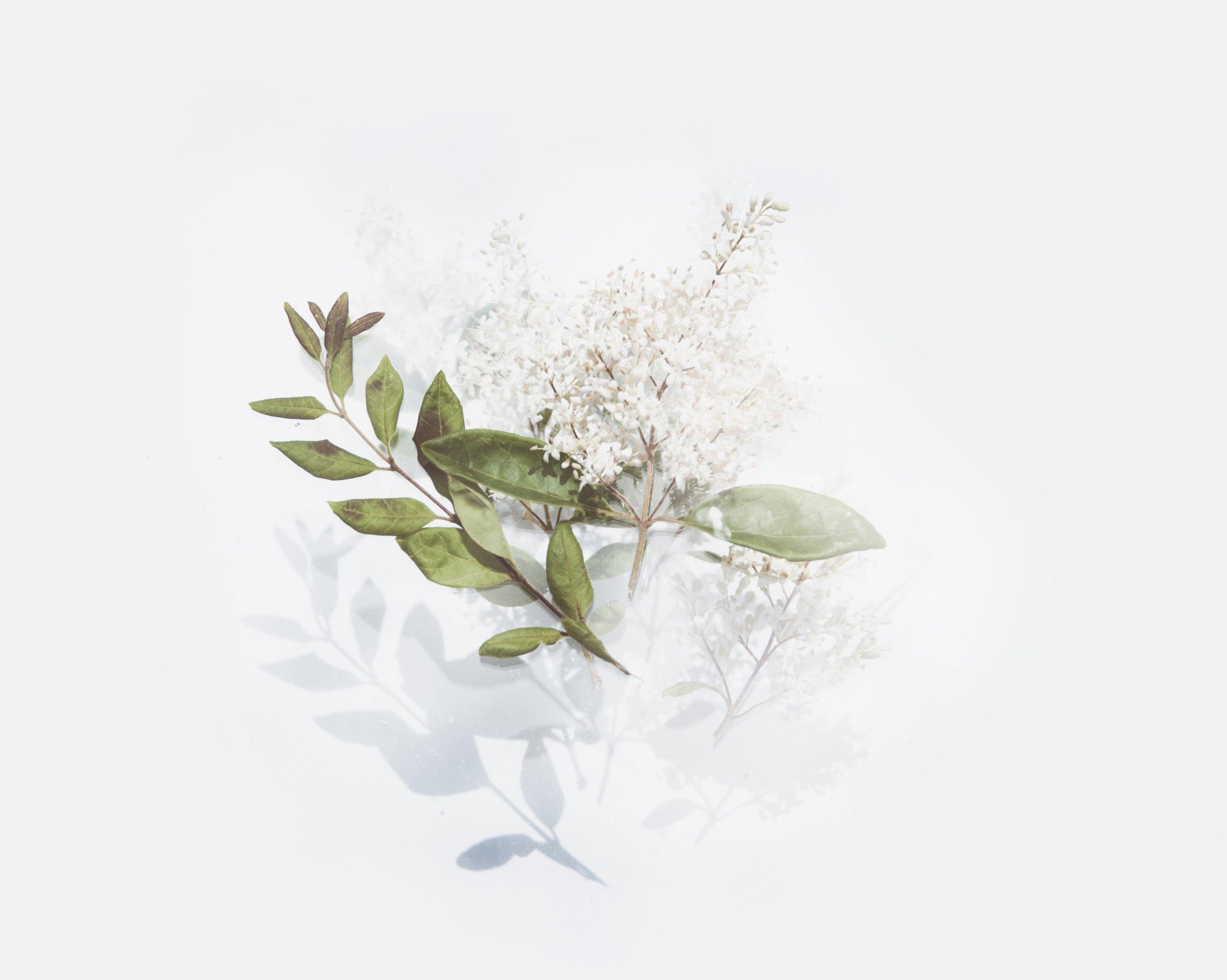 flora-flower-leaves-2395244.jpg