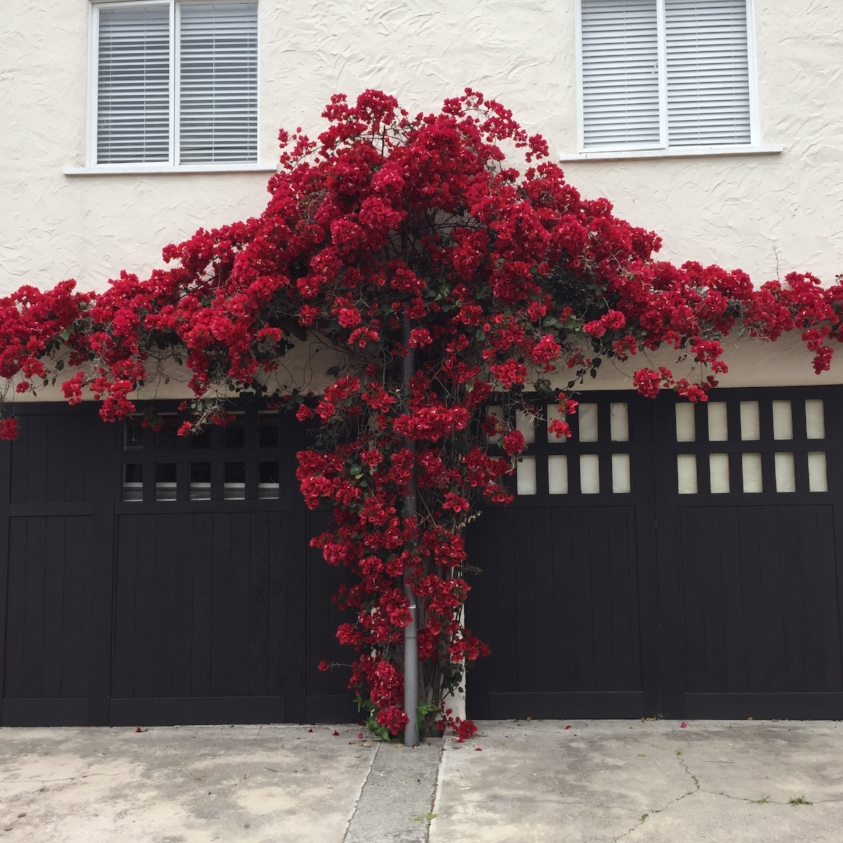 Monday, Wednesday or Friday: - 6631 Dana Street | Oakland, CA 94609