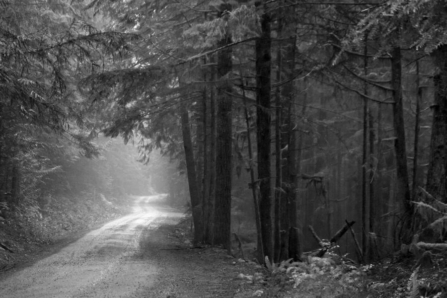 road to nooksack falls
