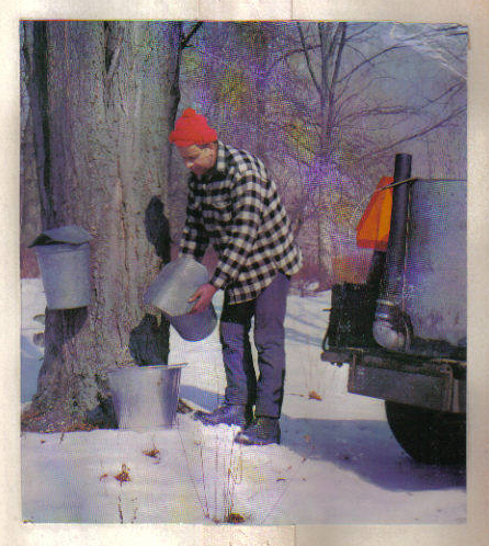 Ralph Curtis gathering sap for the camera (appeared in This Week in the Poconos, 1975)