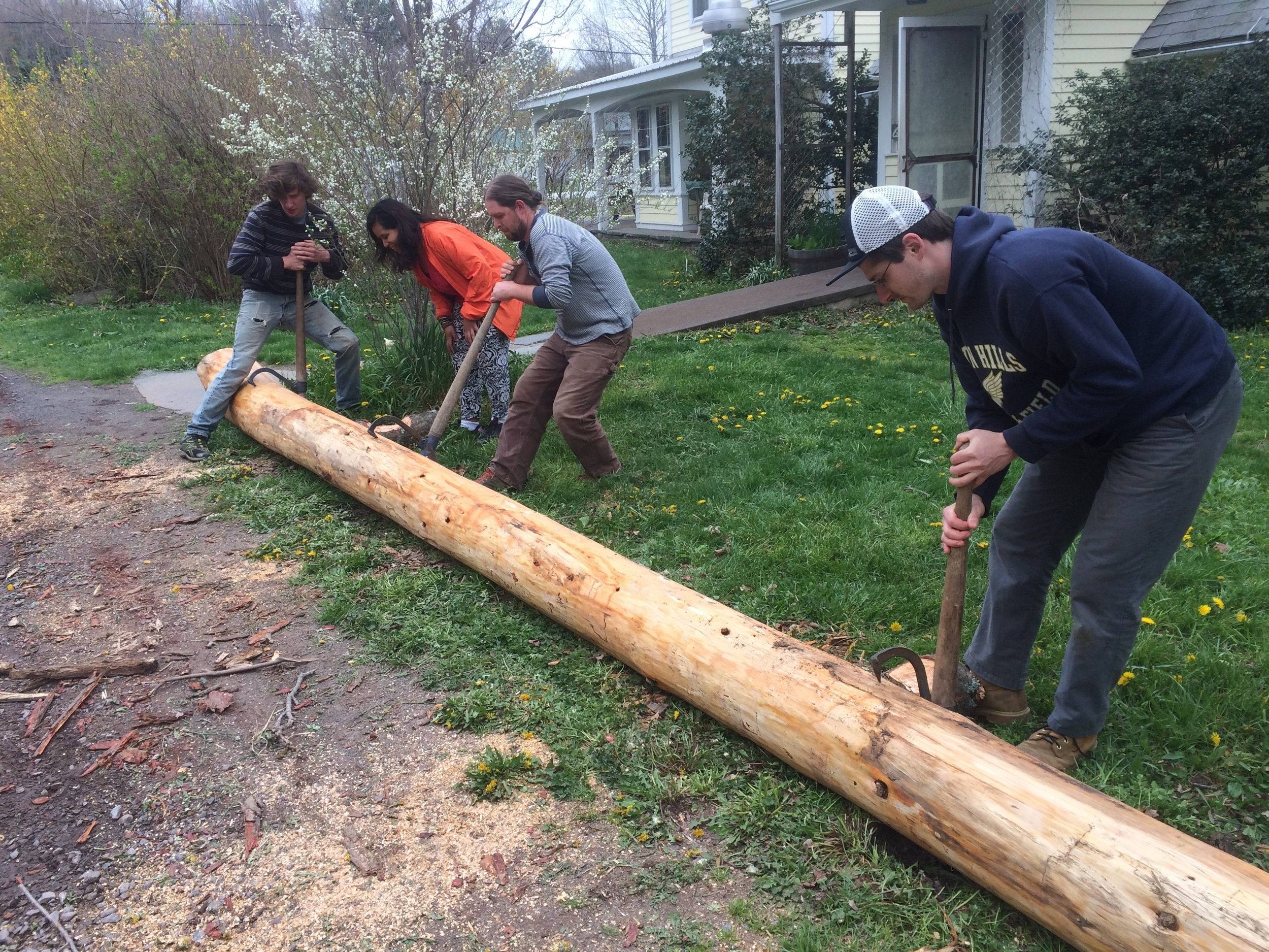 New log being rolled into place.