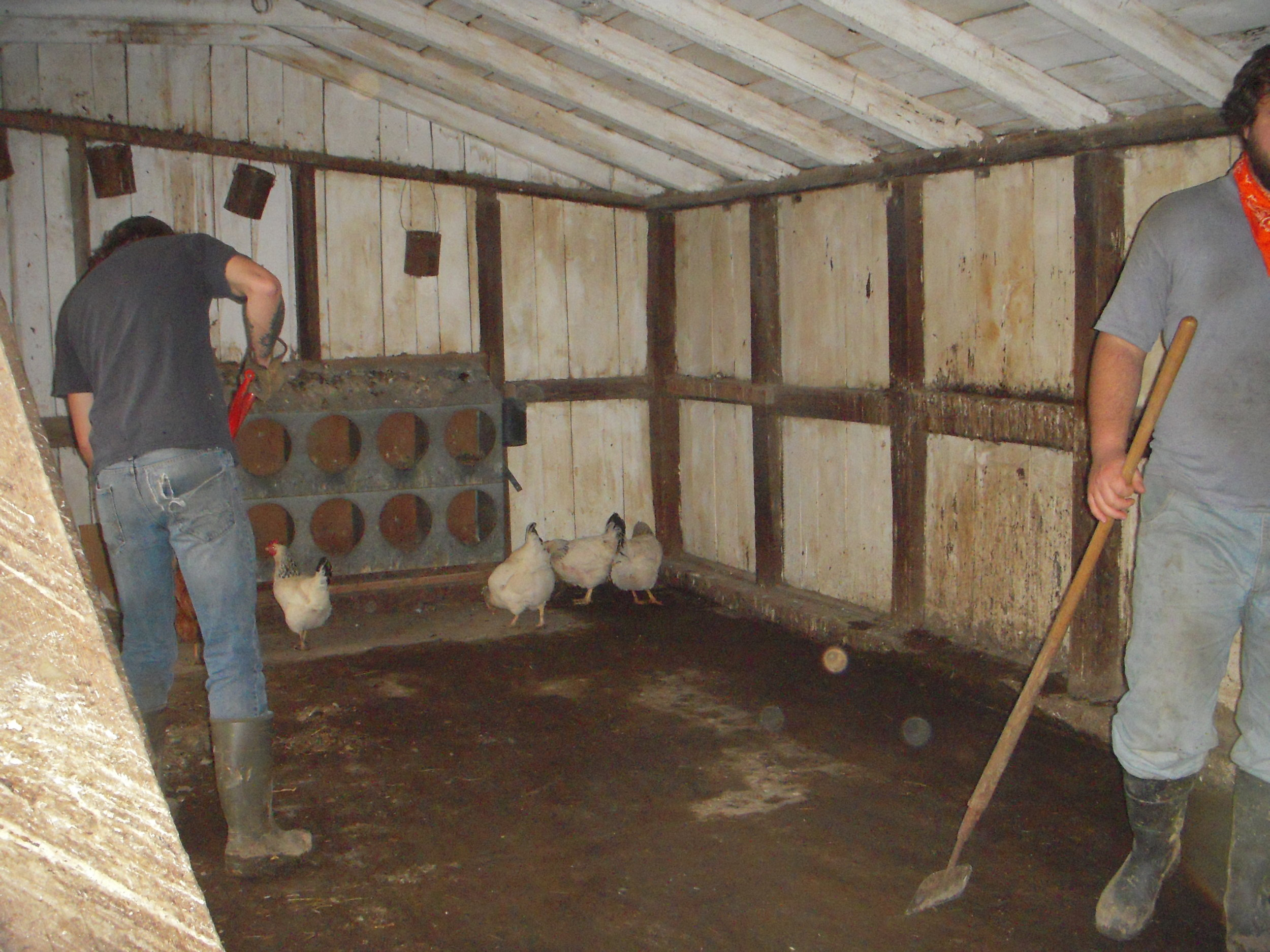 The hen house gets a thorough cleaning.
