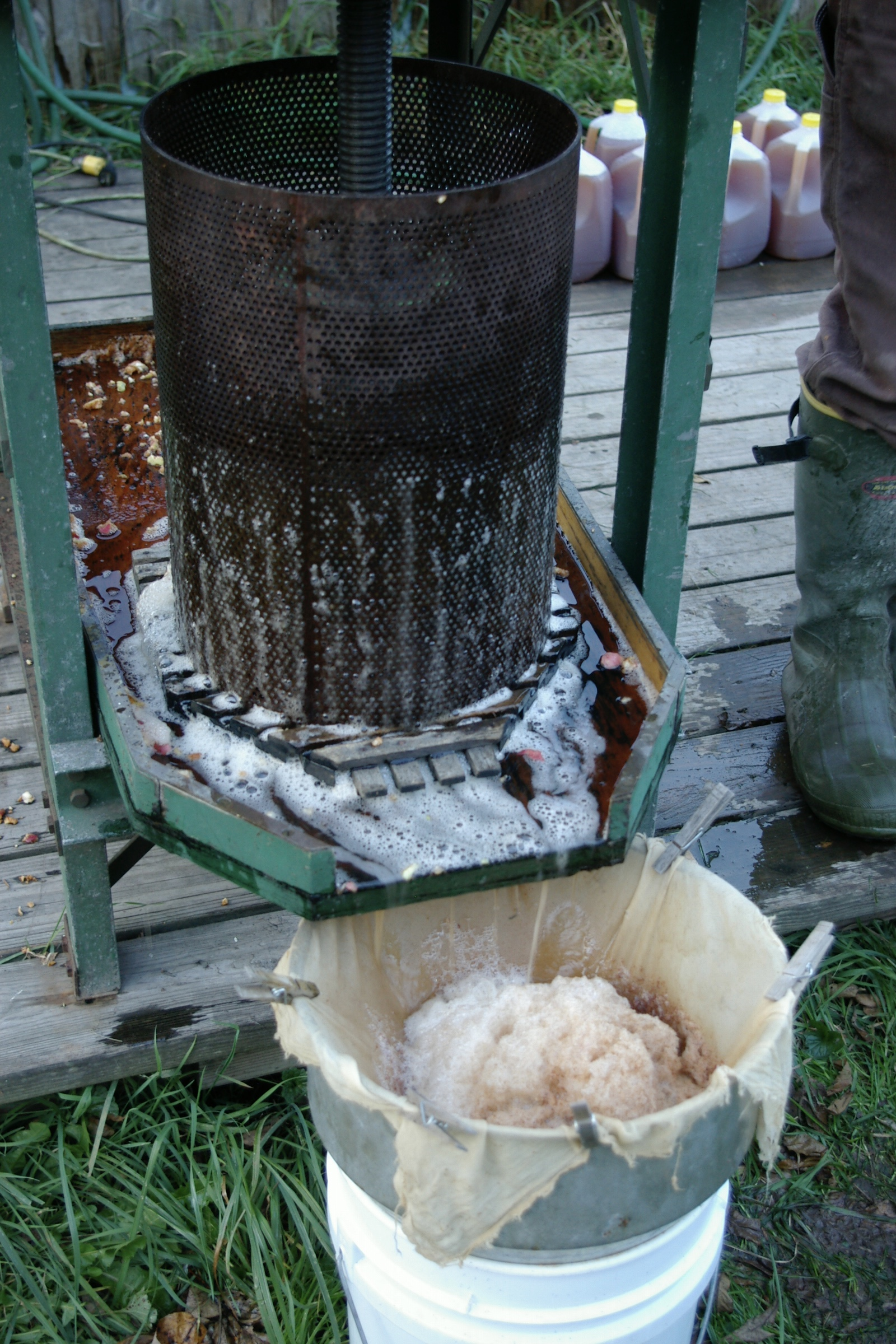 The ground apples being pressed into cider