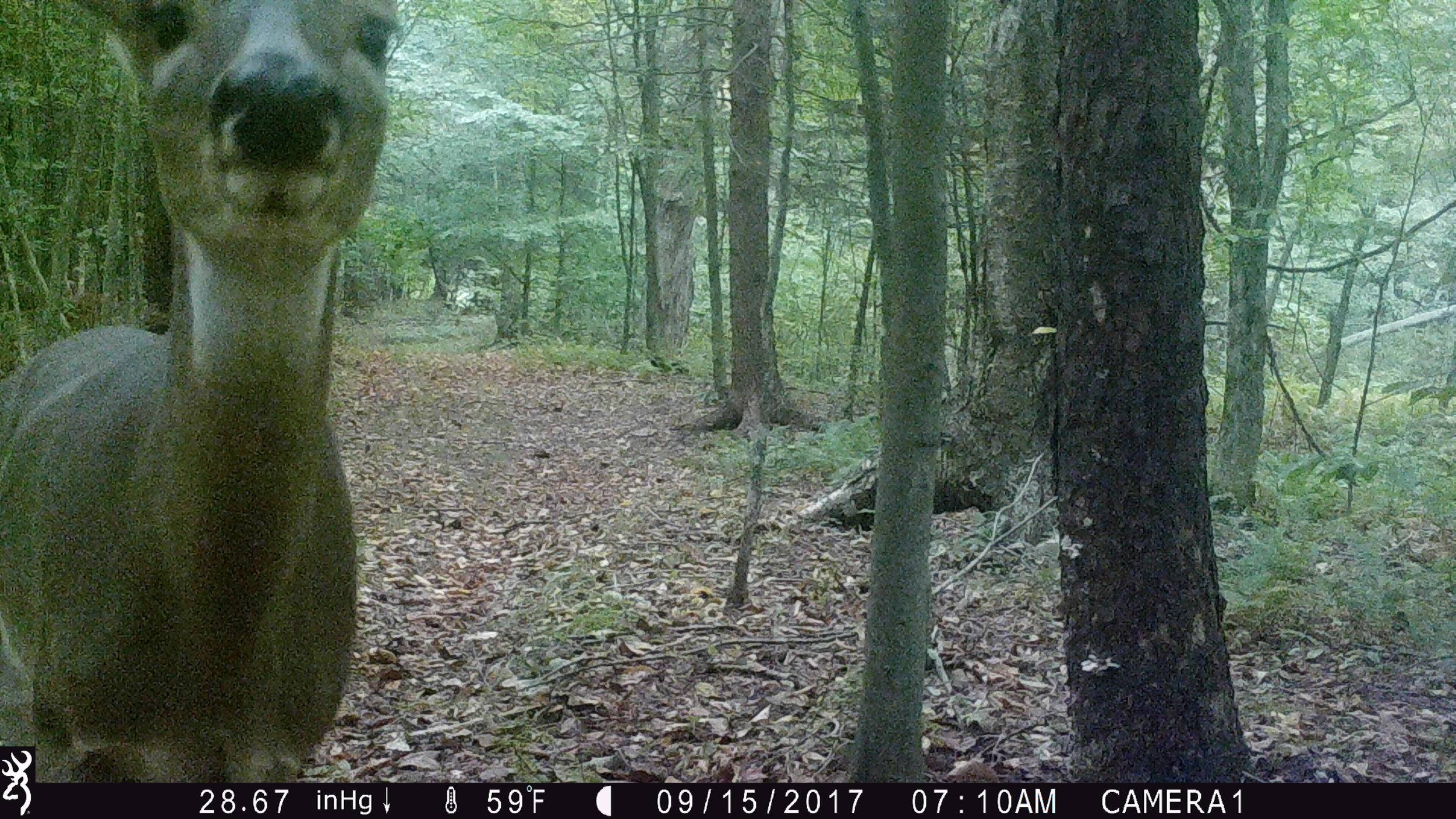 JourneysEndFarm_TrailCam (6).jpg