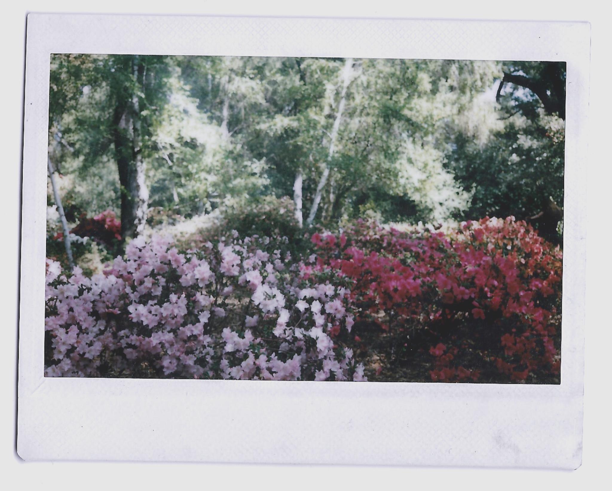 Merissa Pics 2-3.jpg