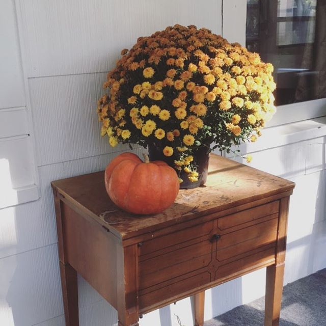 I went to the pumpkin patch this weekend. This pretty mum was being given away for free. The man told us that warm weather had damaged the plants, and so the mums weren't worth selling 🍂 What someone considers worthless, someone else considers a thing of great beauty. And bonus! Now my front porch is just that much more festive 🍁🎃🌼