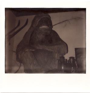 the merc monkey. Polaroid:  Hannah Oreskovich