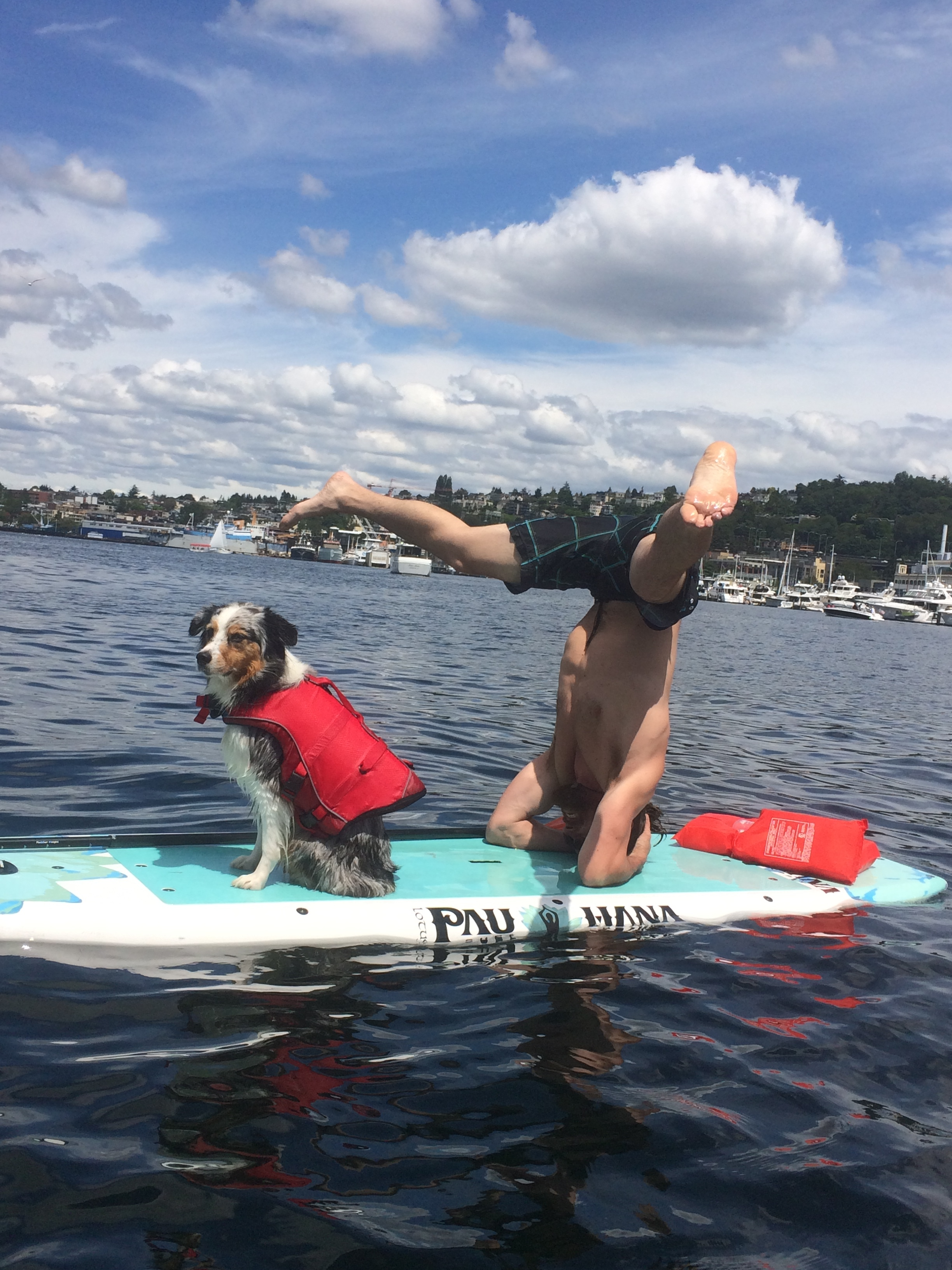pet-friendly-paddle-board-rentals-seattle.jpg