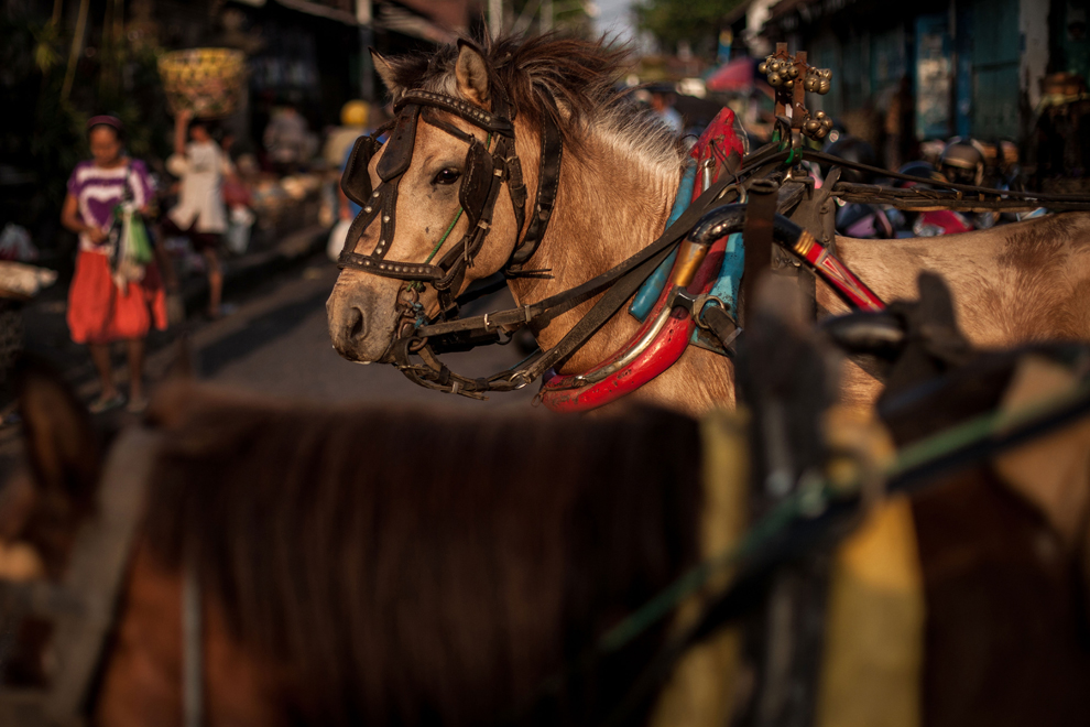 A-Dokar-horse-waits-in-the-Badung-market-October-14-2012-Denpasar-Bali-Indonesia.-The-Dokar-horse-and-cart-is-traditional-local-transport-used-in-Denpasar.-Chris-McGrathGetty-Images.jpg