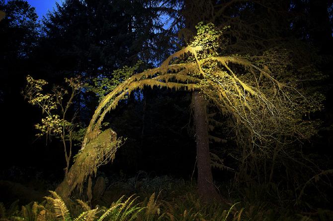 A Hunchback Tree