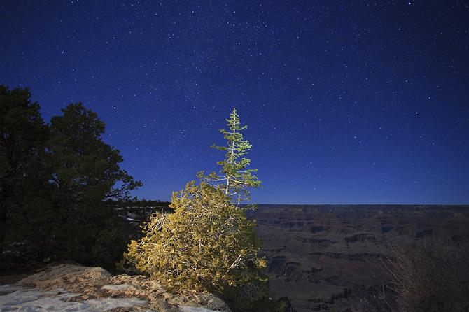 A Solstice Tree