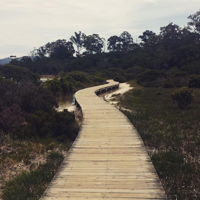 On the [Merimbula] Boardwalk...
