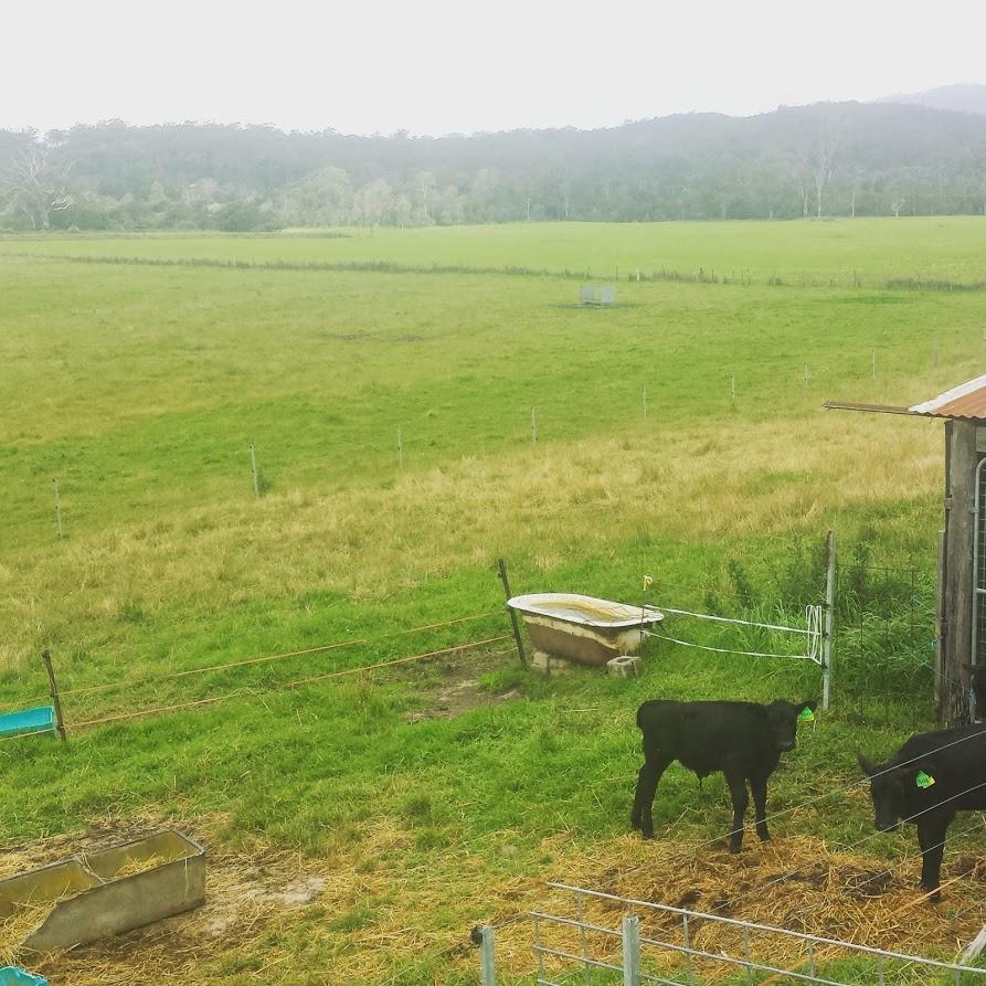 Rural settings in Bega Valley