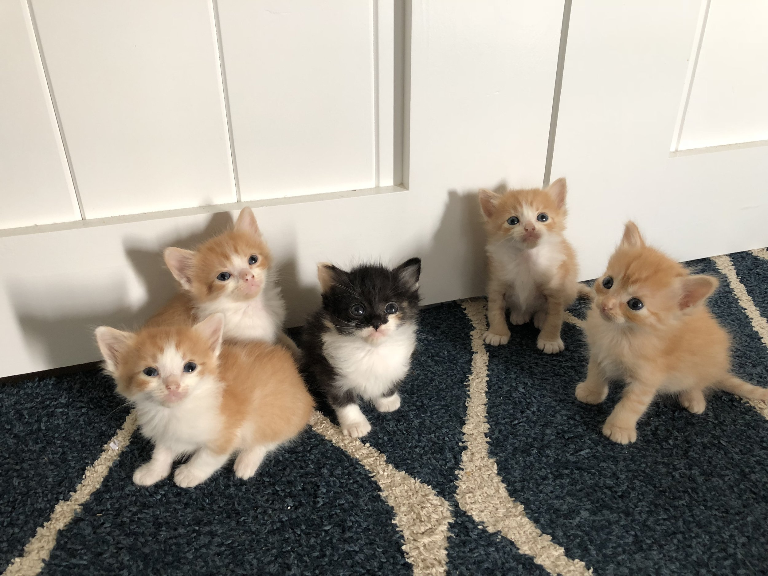 According to my daughter all the orange kitties are boys and the one in the middle, the black and white one, with orange spots is the girl :)