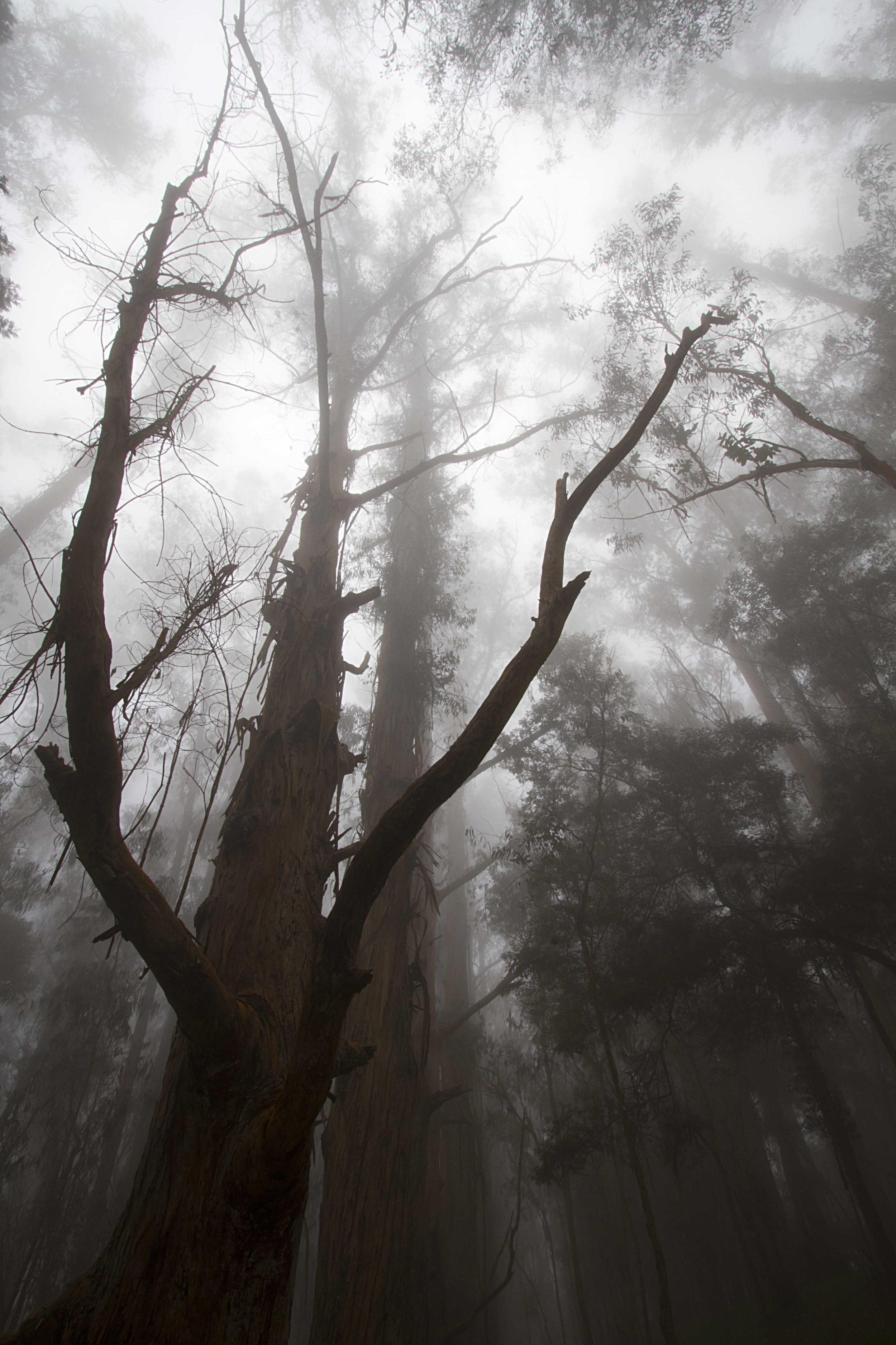 Upcountry Fog