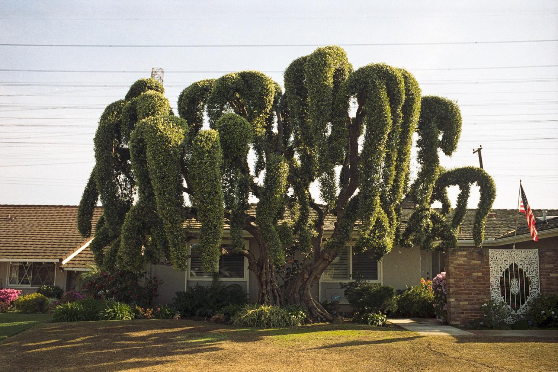 tree ii (1 of 1).jpg