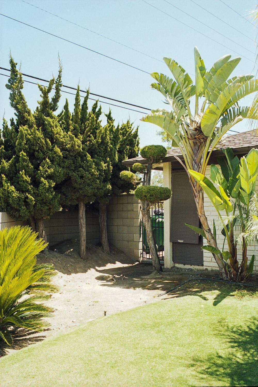 trees (1 of 1).jpg