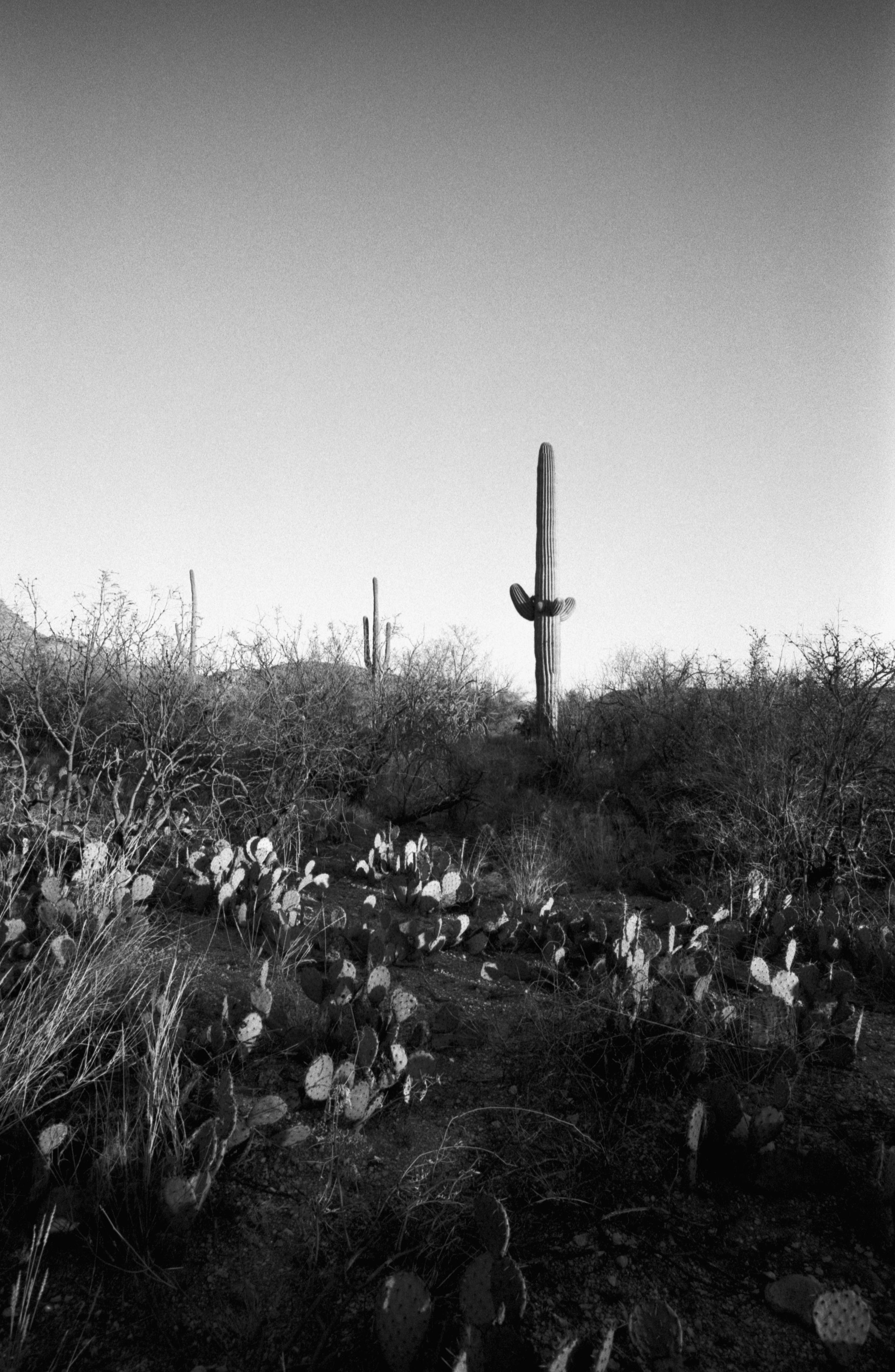AZ Cactus (1 of 1)-2.jpg