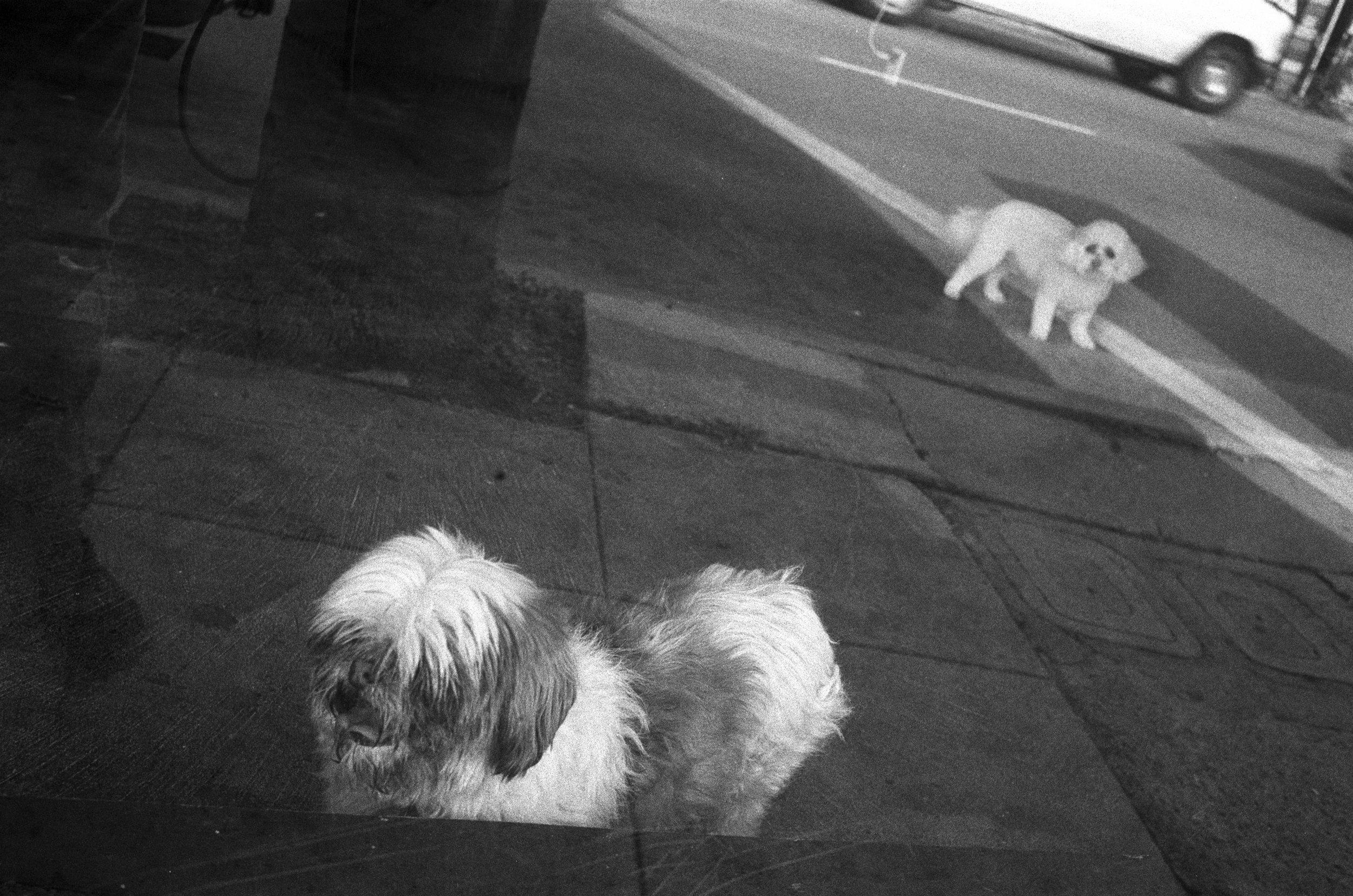 window dog web _1.jpg