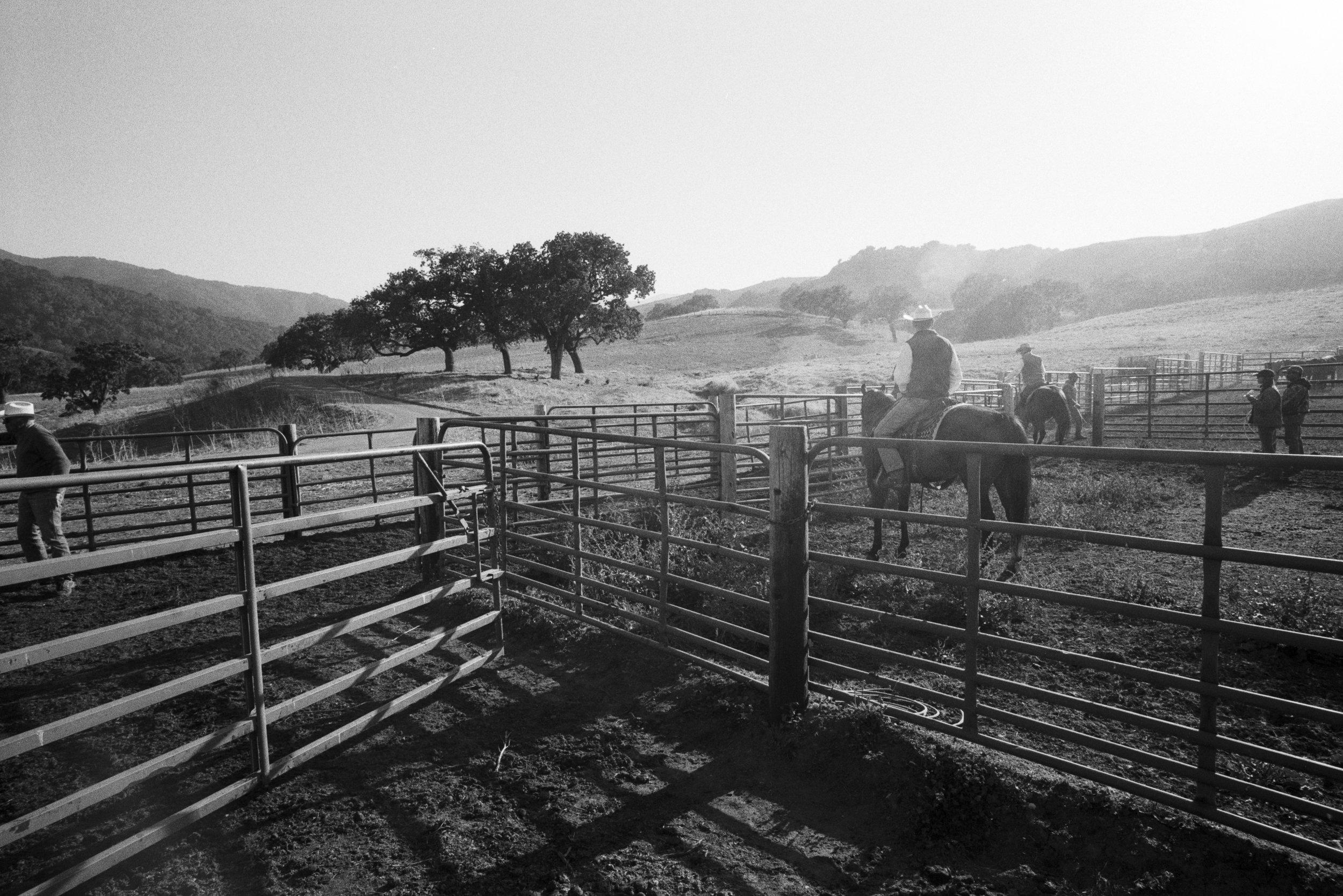 ranch web _1.jpg