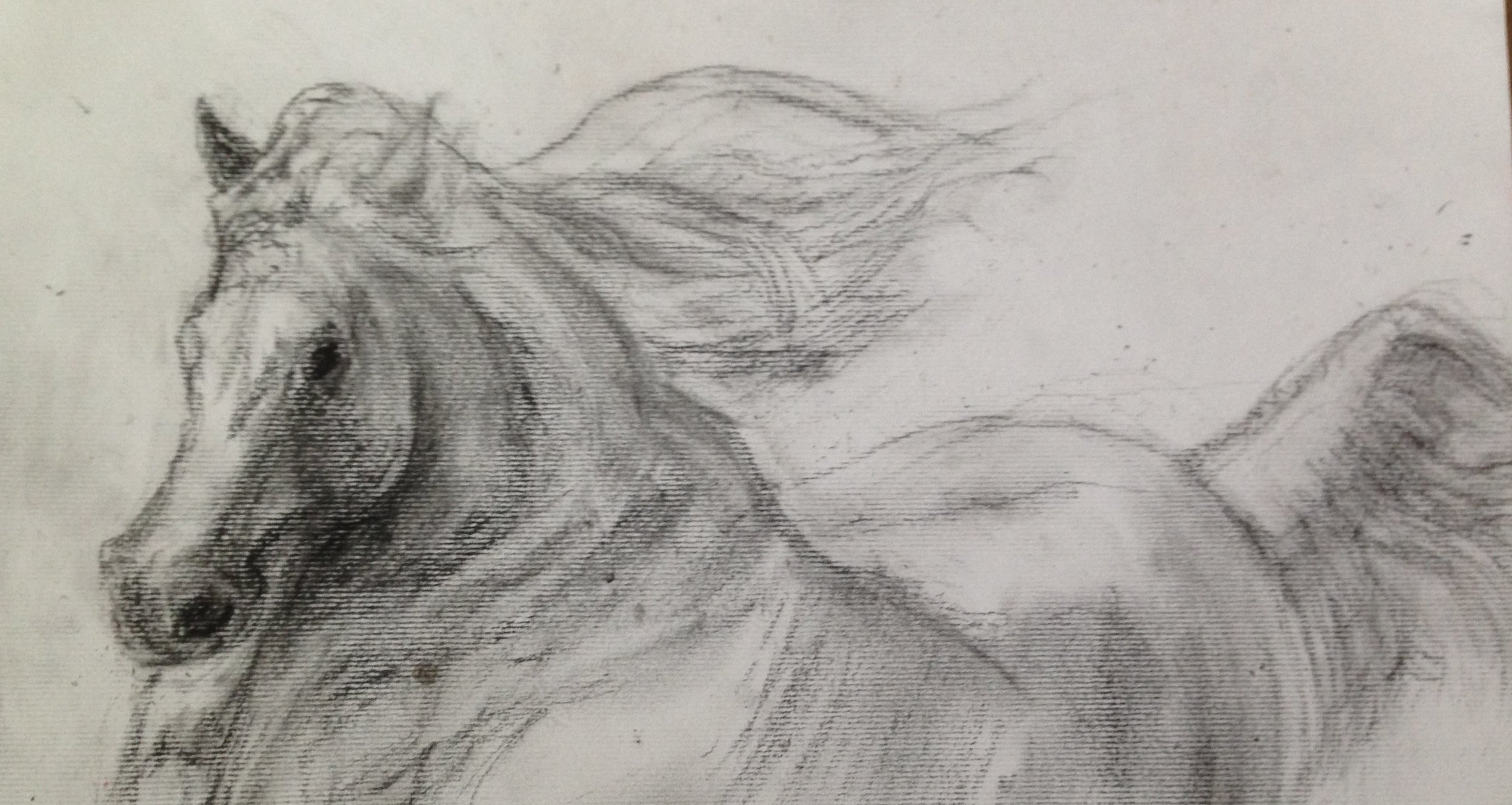 Stallion, Charcoal on paper.