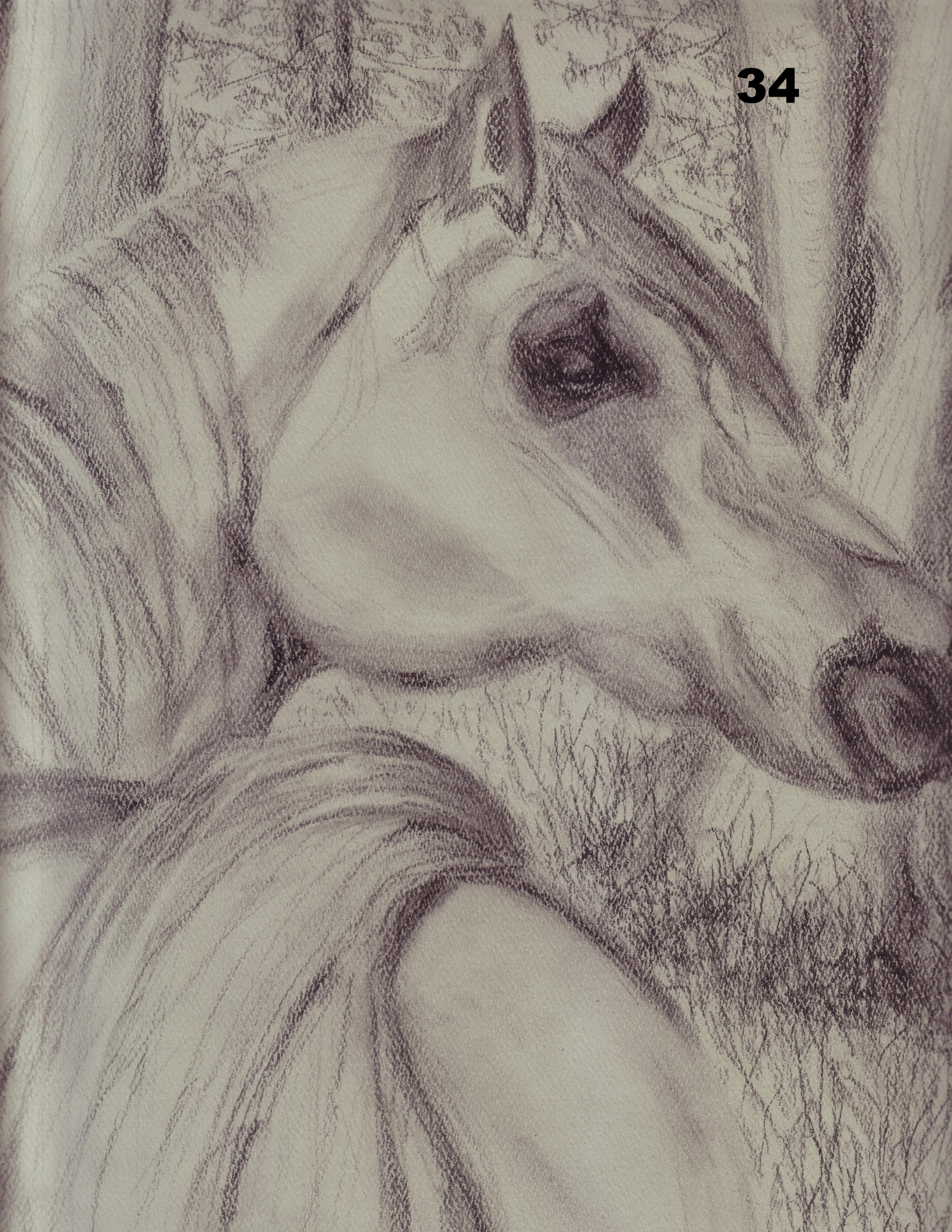 Forest Pause, Charcoal on paper.