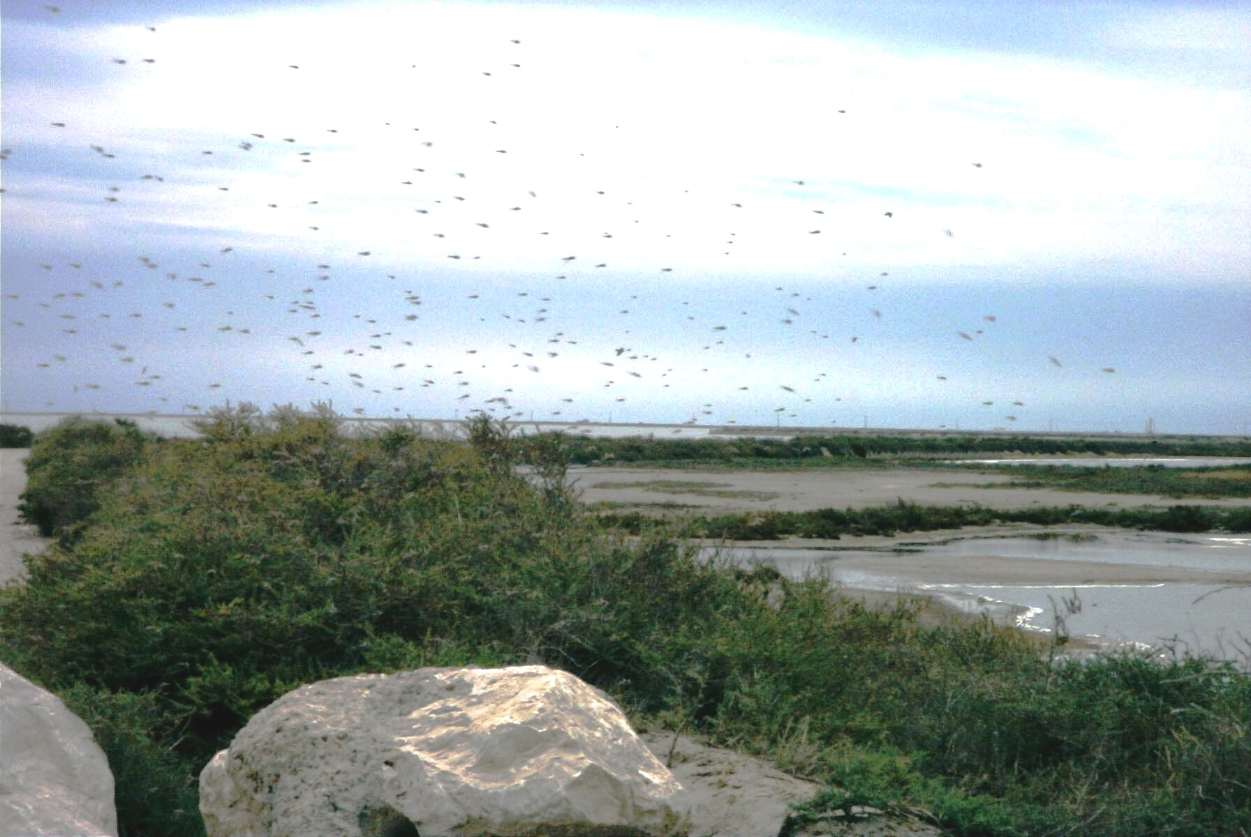 The Camargue, bird watchers paradise