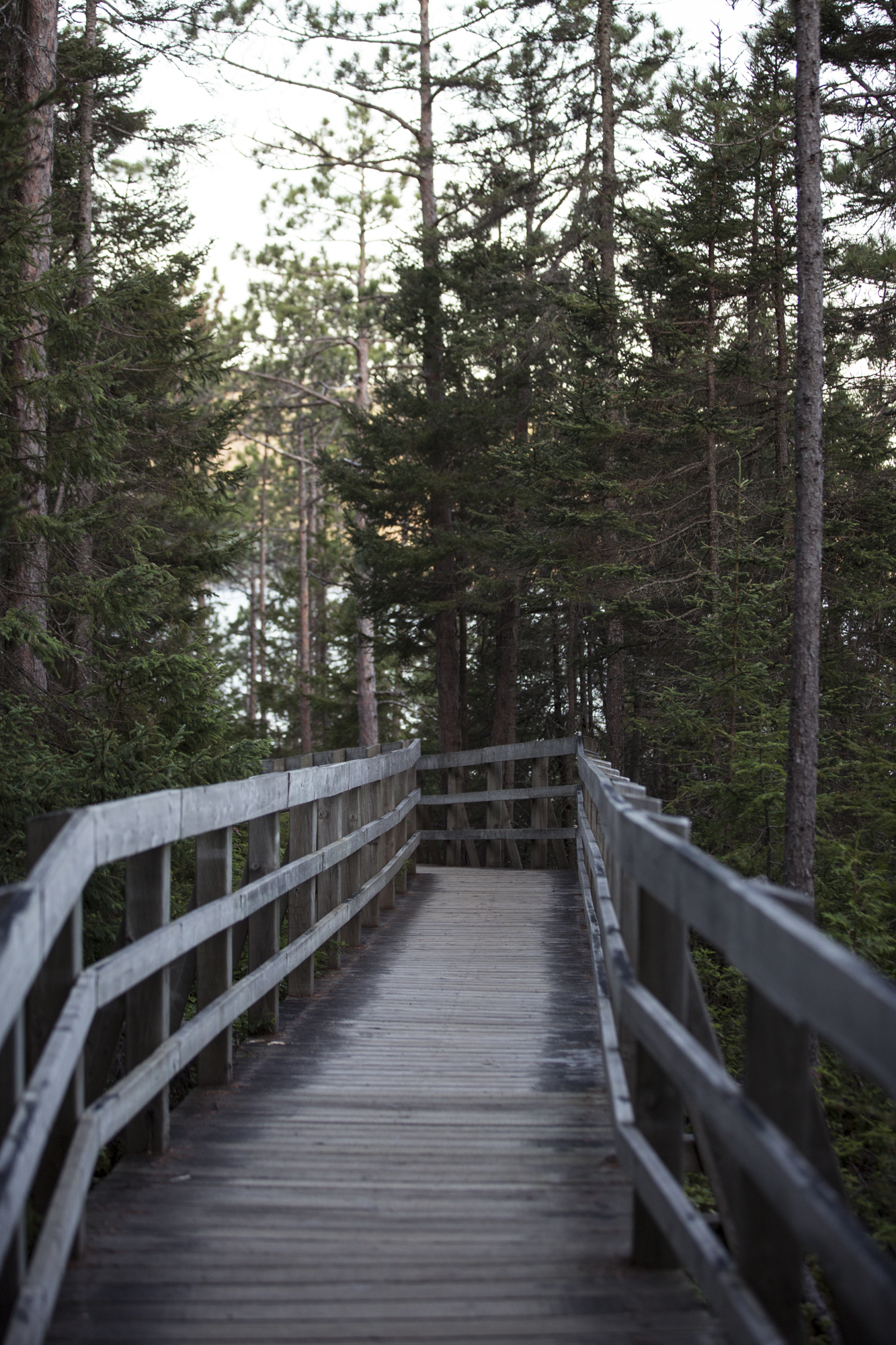The boardwalk leading to the Beluga lookout point.