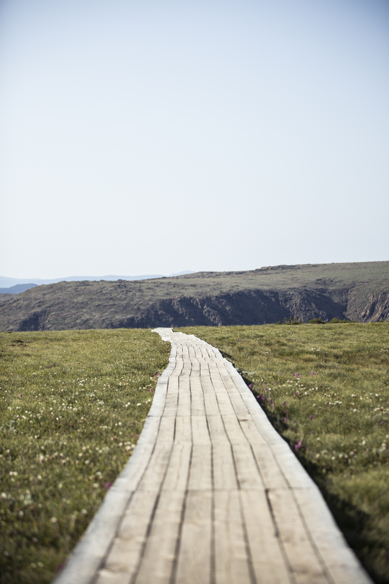 The boardwalk from the top of Mount Albert.
