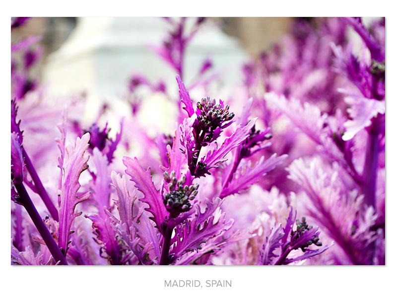 purple-plant.jpg