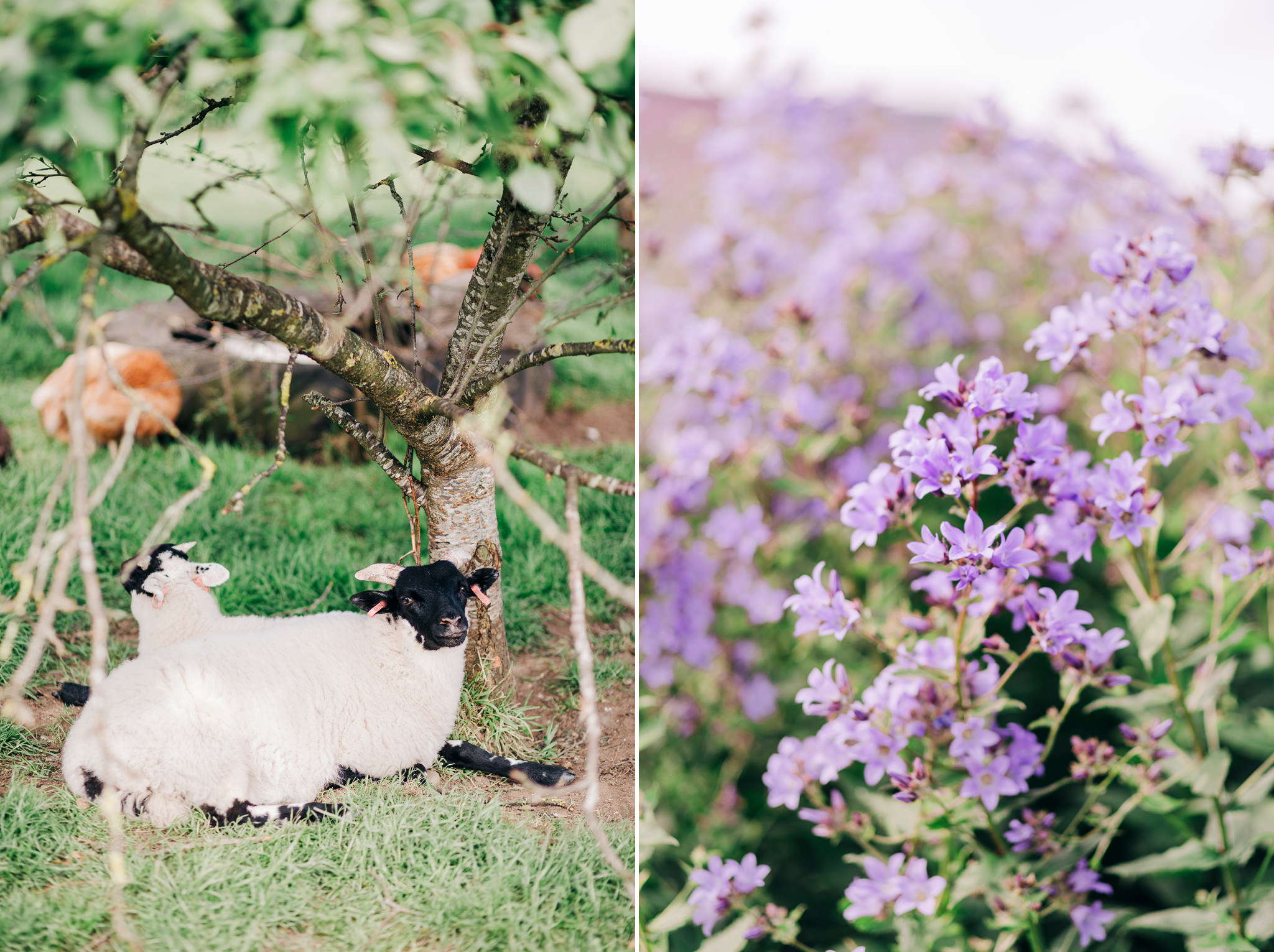 knockraich farm fintry rustic wedding photographer