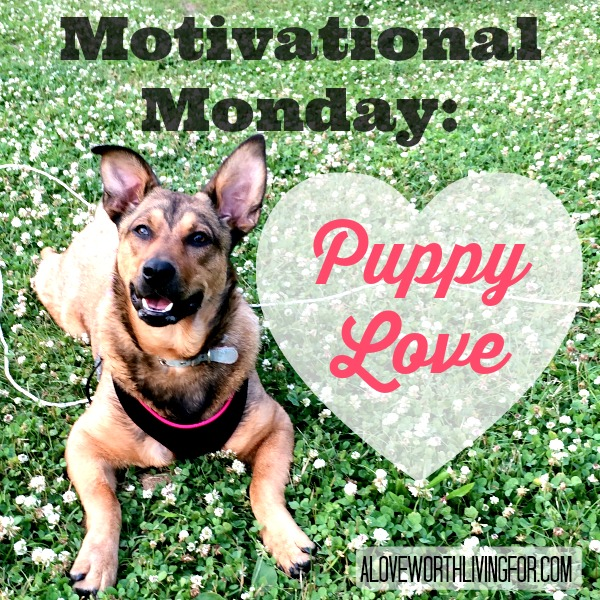 #MotivationMonday!! Puppy Love - Pursuing a Puppy -like Faith & Excitement! by A Love Worth Living For