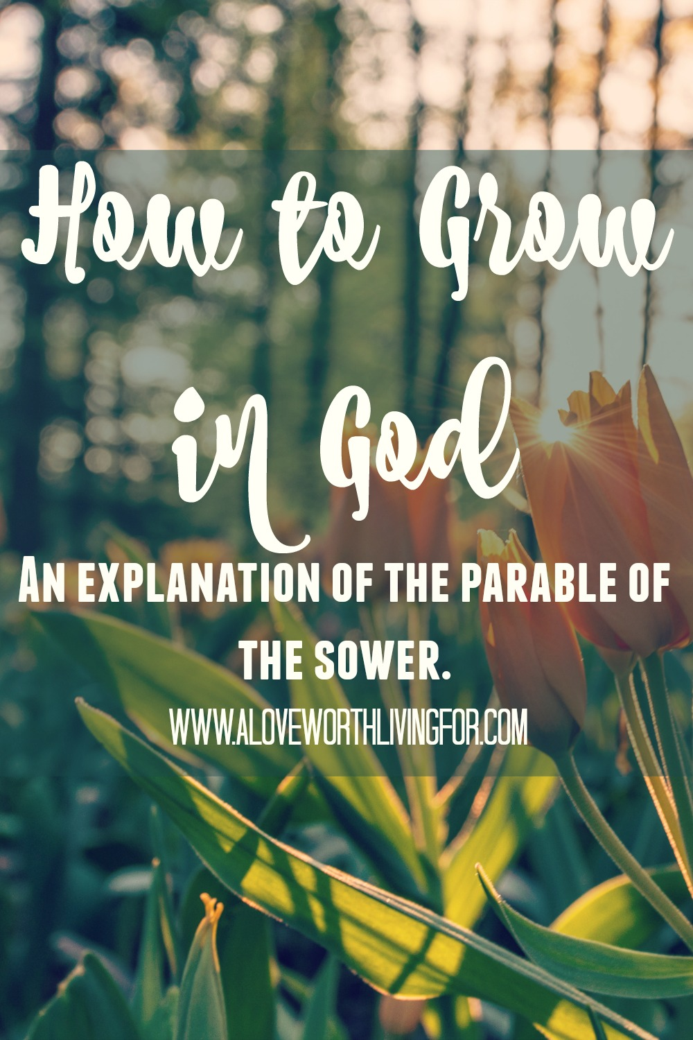 We were created to be in community with God and others. How can we grow in our relationship with God? How can we mature in our faith and help others to the best of our ability? The answer is in the Parable of the Sower.