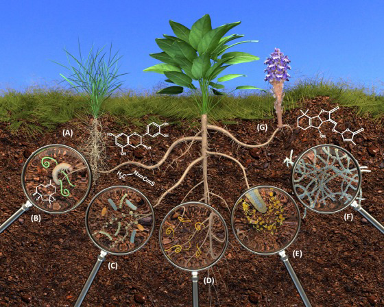 pLANT roots by christophe jacquet; metabolomics in the rhizosphere tapping into belowground chemical communication; trends in plant science