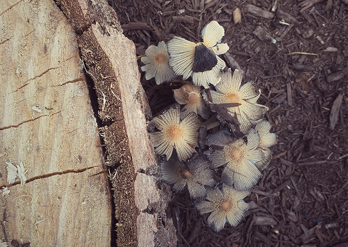 Fungal flowers; PHOTO by: rootshoot
