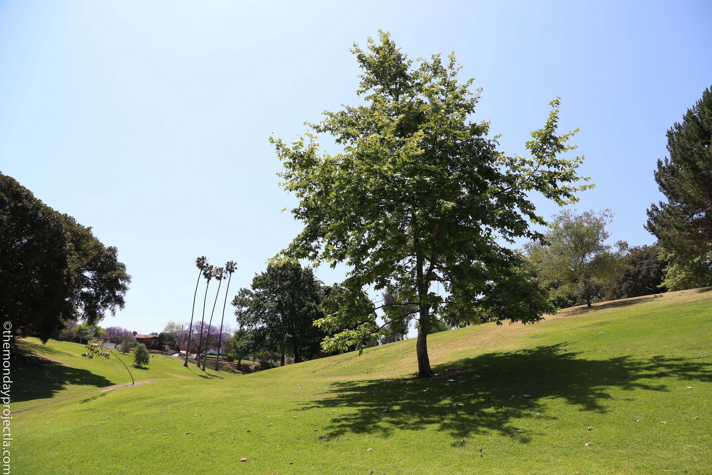 Averill Park rolling hills